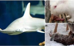 """Còn nhớ con cá mập """"ăn chay"""" này chứ? Đó chỉ là một ví dụ cho thấy thế giới tự nhiên có thể kỳ dị đến thế nào"""
