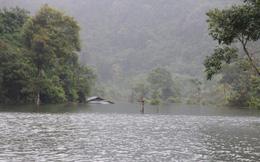 Thung lũng khô cằn đột ngột thành hồ nước và đàn 'cá ma' trong núi chui ra