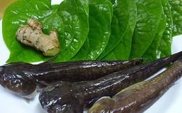Món ăn từ cá bớp chữa yếu sinh lý rất dễ làm