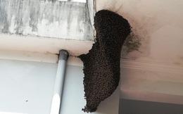 Bị đàn ong rừng lao ra đốt, 1 người đàn ông tử vong, 10 người đi cấp cứu