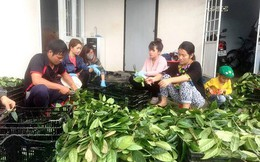 """""""Bí mật"""" khu bảo tồn trên 40 loài trà hoa vàng quý hiếm ở Việt Nam"""