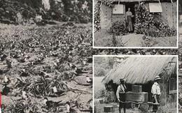 Câu chuyện ly kỳ về Robinson ngoài đời thực sống trên đảo hoang suốt 30 năm