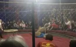 Clip: Bị lá cờ thu hút, sư tử phá tan hàng rào bảo vệ, lao vào tấn công bé gái đi xem xiếc