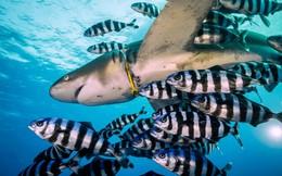 24h qua ảnh: Cá mập khổng lồ bị mắc kẹt trong vòng nhựa