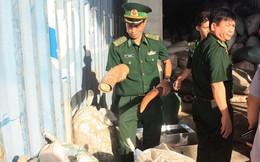 (NÓNG) Phát hiện hơn 10 tấn ngà voi và vảy tê tê nhập lậu tại Cảng Tiên Sa