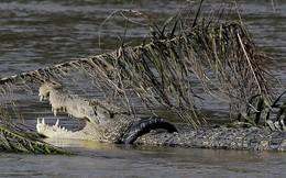 24h qua ảnh: Cá sấu khổng lồ mắc kẹt trong lốp xe ở Indonesia