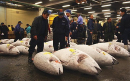 Chợ cá Tsukiji lớn nhất nước Nhật chính thức đóng cửa