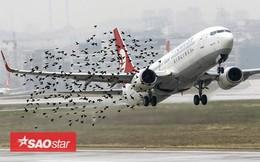 Điều gì sẽ xảy ra khi những chú chim bay vào động cơ máy bay?