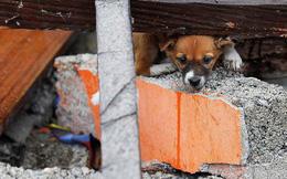 """Cảnh tượng đáng sợ ở Indonesia: Đất hóa lỏng """"cuốn phăng"""" hàng trăm ngôi nhà cùng lúc"""
