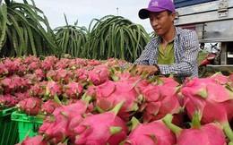 """""""Giải mã"""" việc Trung Quốc đột ngột ngưng mua thanh long Việt Nam"""
