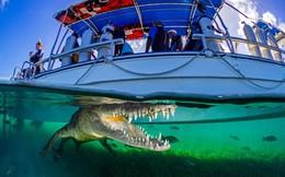 """24h qua ảnh: Cá sấu khổng lồ """"rình rập"""" dưới tàu chở du khách"""