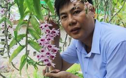 Hà Tĩnh: Thầy giáo dạy sinh học trường làng sở hữu vườn lan tiền tỷ