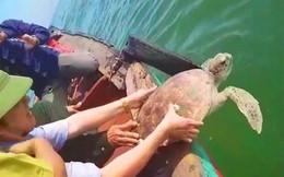 Rùa quý hiếm nặng 15kg mắc lưới ngư dân trên biển Hà Tĩnh