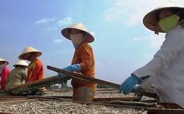 Phát hiện sản phẩm khô biển có chất gây hại sức khoẻ