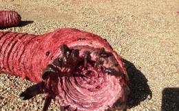 Sự thật loài sâu tử thần to bằng bắp tay, giết người bằng cách phóng độc