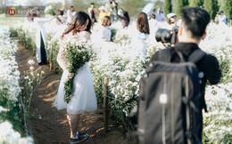 Vườn cúc hoạ mi ở Hà Nội 'thất thủ' cuối tuần: 1 mét vuông có chục nhiếp ảnh gia và mẫu