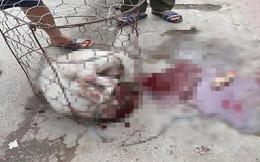 Chó Pitbull 30kg lao vào cắn chủ nhà và hàng xóm ở Hà Nội: Thường bị bỏ 1 mình trong lồng