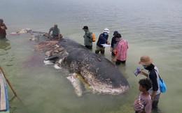 24h qua ảnh: Cá voi chết vì nuốt hơn 1.000 mảnh nhựa vào bụng