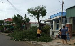 Bão số 9 cách đảo Phú Quý 100km, người dân tất bật cắt cây, chằng chống nhà cửa
