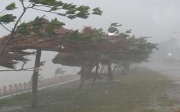 Bão số 9: Đang mưa lớn ở đảo Phú Quý, Cần Giờ, lãnh đạo TP Vũng Tàu gõ cửa từng nhà dân vận động sơ tán