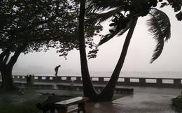 Gió mạnh cấp 8 đổ bộ vào Vũng Tàu, cây xanh gãy đổ hàng loạt