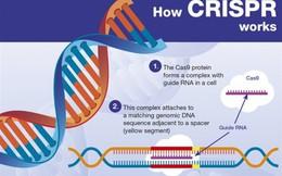 Trung Quốc tuyên bố tạo ra được những đứa trẻ chỉnh sửa gen đầu tiên