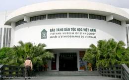 Hai cây sưa đỏ tại Bảo tàng Dân tộc học Việt Nam bị cưa trộm