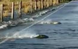 Clip: Tài xế kinh ngạc chứng kiến cá hồi bơi tung tăng trên đường cao tốc