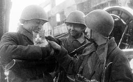 Mèo và lạc đà giúp Hồng quân đè bẹp phát xít Đức thế nào?