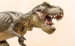 Những sự thật bất ngờ và thú vị về loài khủng long bạo chúa