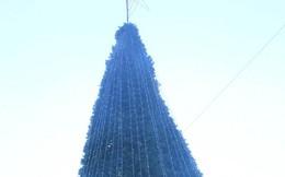 Ảnh: Cây thông Noel khổng lồ cao 12m mừng lễ Giáng sinh ở Hà Nội