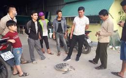 Bỏ tiền triệu mua rùa biển quý hiếm rồi thả về tự nhiên