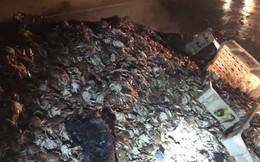 2 tấn cua bất ngờ bị nướng chín trên đường giữa đêm khuya