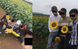 Ngang nhiên bẻ hoa hướng dương rồi cười hớn hở trong vườn, nhóm nam nữ khiến dân mạng phẫn nộ