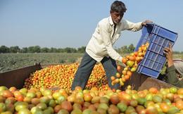 Căng thẳng leo thang, Nga cấm vận hàng nhập khẩu từ Ukraine