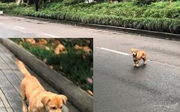 Kinh nghiệm xử lý chó thả rông ở Trung Quốc