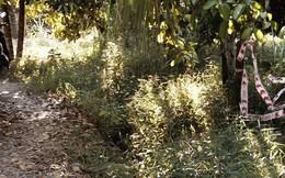 Bé gái 4 tuổi bị người đàn ông 63 tuổi cưỡng hiếp trong vườn tràm