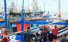 Trúng đậm hải sản, nhiều ngư dân bỏ Tết bám biển