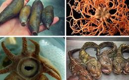 8 sinh vật kỳ quặc tưởng chừng như chúng không thuộc về hành tinh này