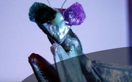 Đây là chú bọ ngựa đặc biệt nhất thế giới, có khả năng mở ra tương lai cho toàn nhân loại