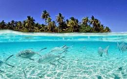Nước biển ngày càng dâng, vậy mà hòn đảo này đang có phản ứng rất lạ khiến khoa học phải đau đầu