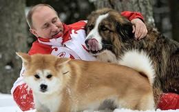 Ảnh: Niềm đam mê chó bất tận của Tổng thống Nga Putin