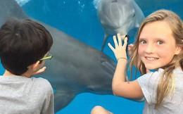 Chỉ bằng vật quen thuộc, bé gái đã gọi được nguyên một đàn cá heo trong thủy cung đến chơi với mình