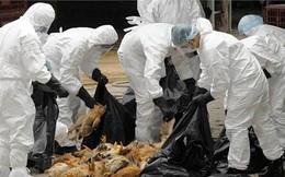 Công điện khẩn ngăn chặn vi rút cúm A/H7N9 xâm nhiễm vào Việt Nam