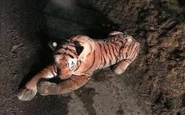 Nông dân phát hiện ra hổ trong chuồng bò, cảnh sát vũ trang ập tới nơi thì ngớ người khi thấy con hổ