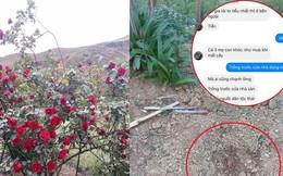Câu bé chăm sóc cây hoa hồng đắt giá suốt 10 năm để rồi bị người lạ đánh ô tô và tận sân nhà ăn trộm