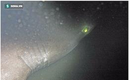 """Phát hiện loài cá mập mới ở Đại Tây Dương, có tổ tiên """"già"""" hơn khủng long"""