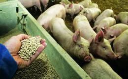 Sử dụng kháng sinh chưa đúng cách trong chăn nuôi - Hệ lụy nguy hại về lâu dài