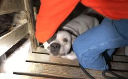 Phản ứng của chó pitbull khi được giải cứu khỏi tầng hầm khiến ai cũng ngỡ ngàng