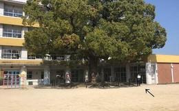 Tin vào lời hẹn 8 năm sau họp lớp, nam sinh đứng cô đơn giữa sân trường vì chẳng có ai đến